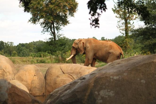 Zoo PS 072